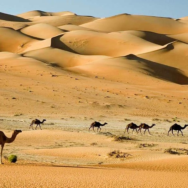 camel safari balochistan