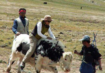 shimshal-yak-safari
